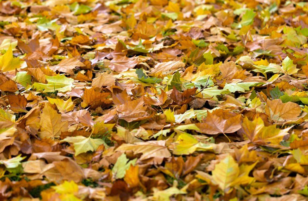 Autumn Leaves Sandhills Credit Union